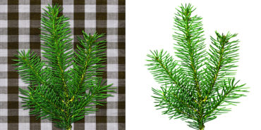 Tree Background Remove in Photoshop